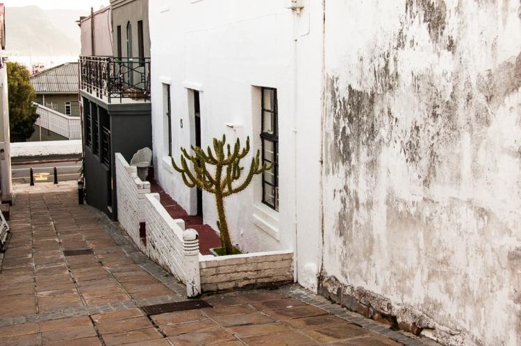 Solitary Cactus